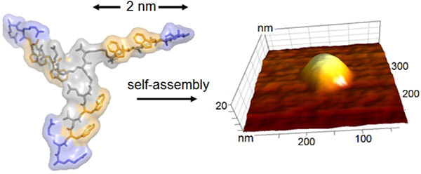 The chemical structure of the nanoscale building block (left) and its assembly into a virus-like capsule (right, topographic AFM image)Picture